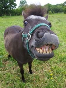 Glück auf Pferden